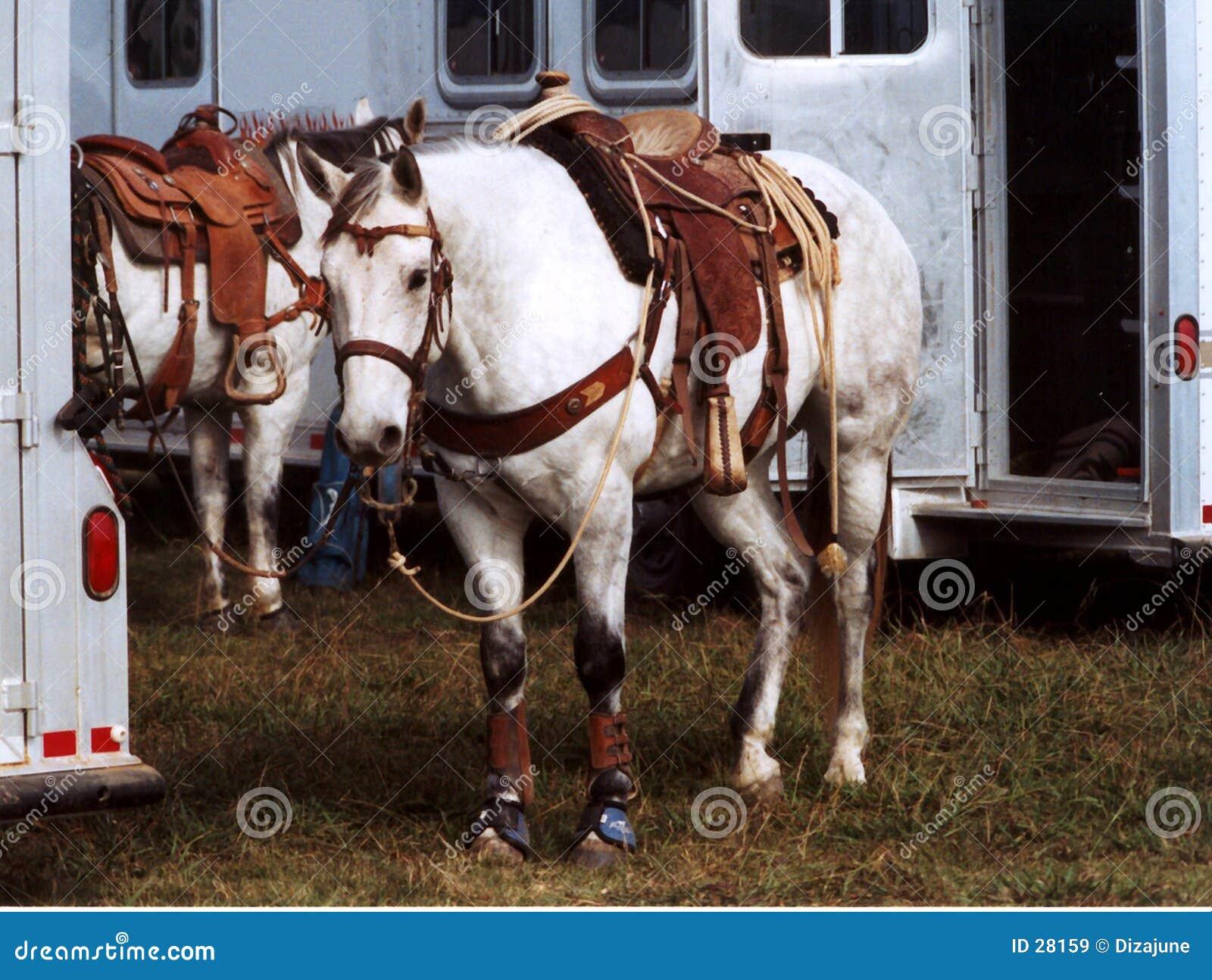 Cavalos Roping