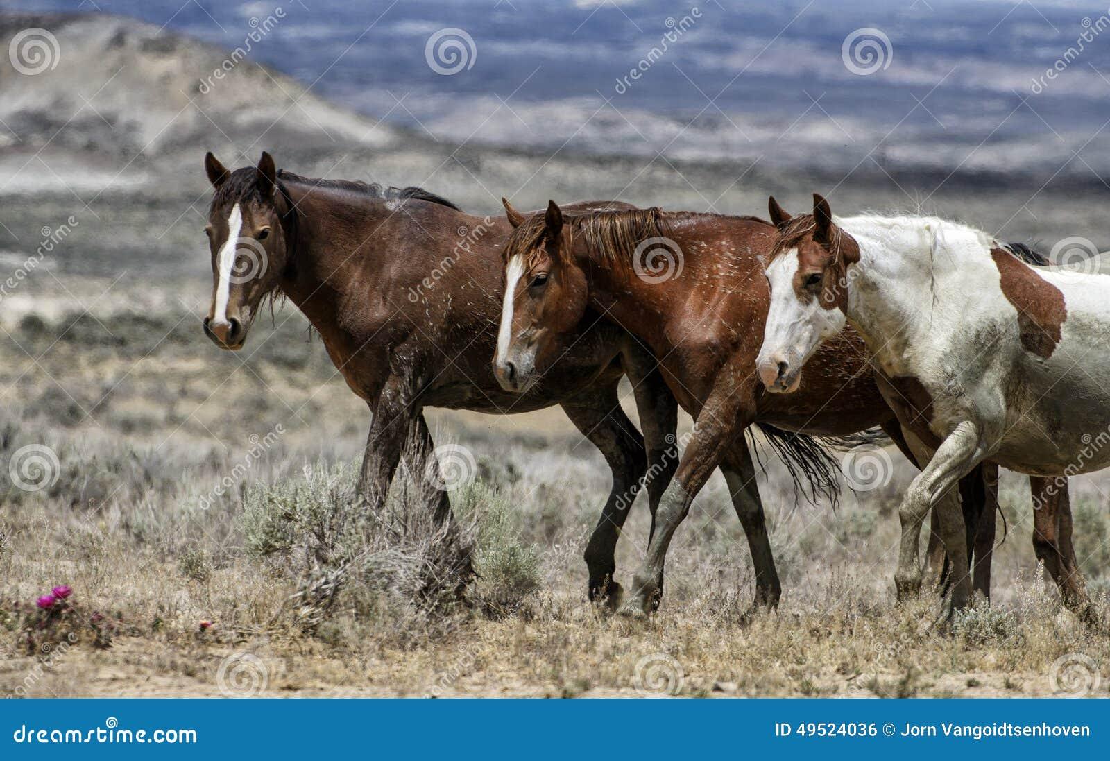 Cavalos selvagens de bacia de lavagem da areia alinhados