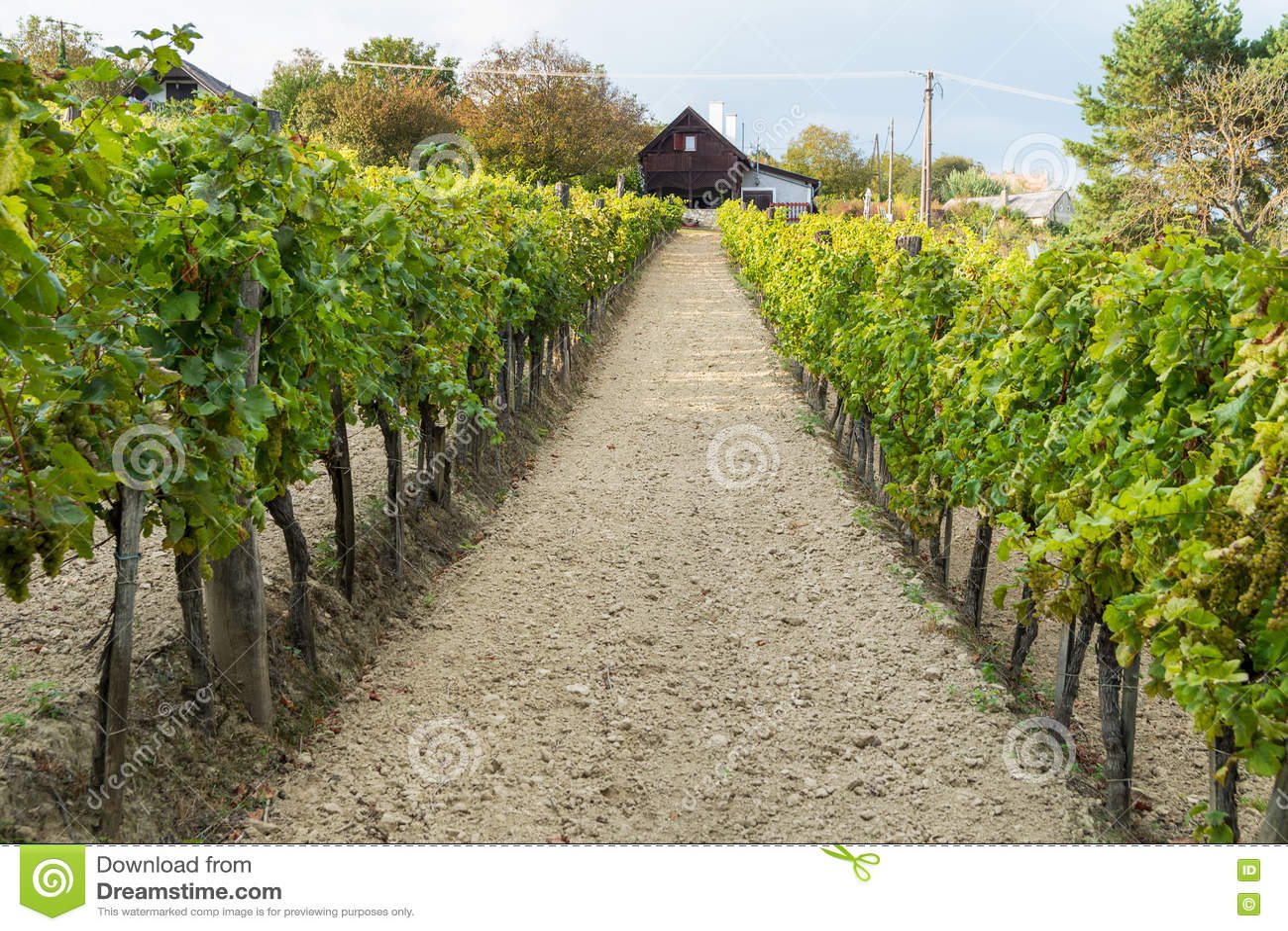 Cave et vignes dans la région de vin de Balaton, Hongrie