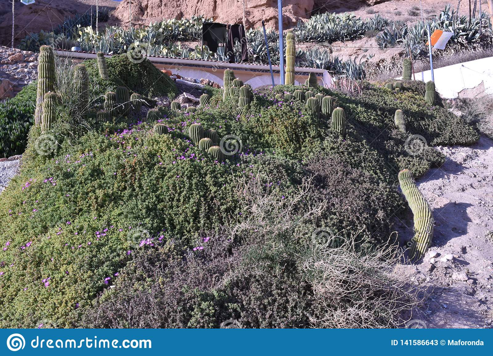 Cave house in the Gorafe desert with area planted with cactus