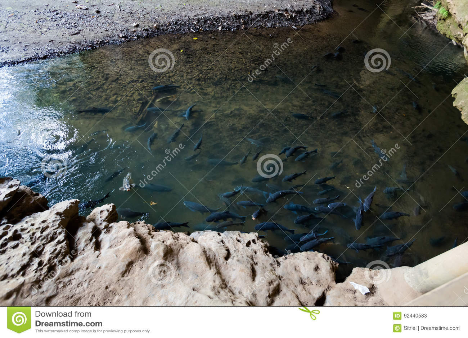 pond full of fish