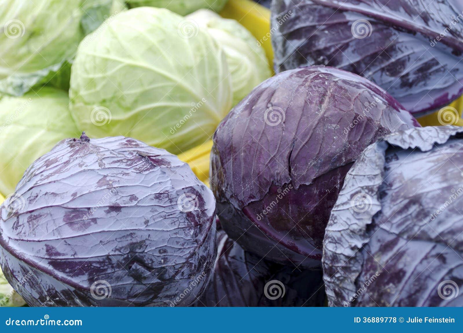 Download Cavolo fotografia stock. Immagine di viola, verde, cavoli - 36889778