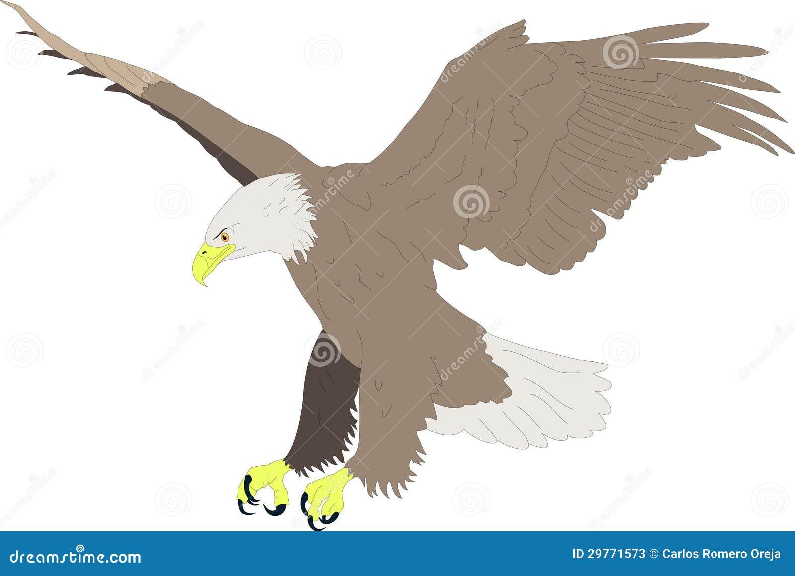 Águila calva ilustración del vector. Ilustración de libertad - 29771573