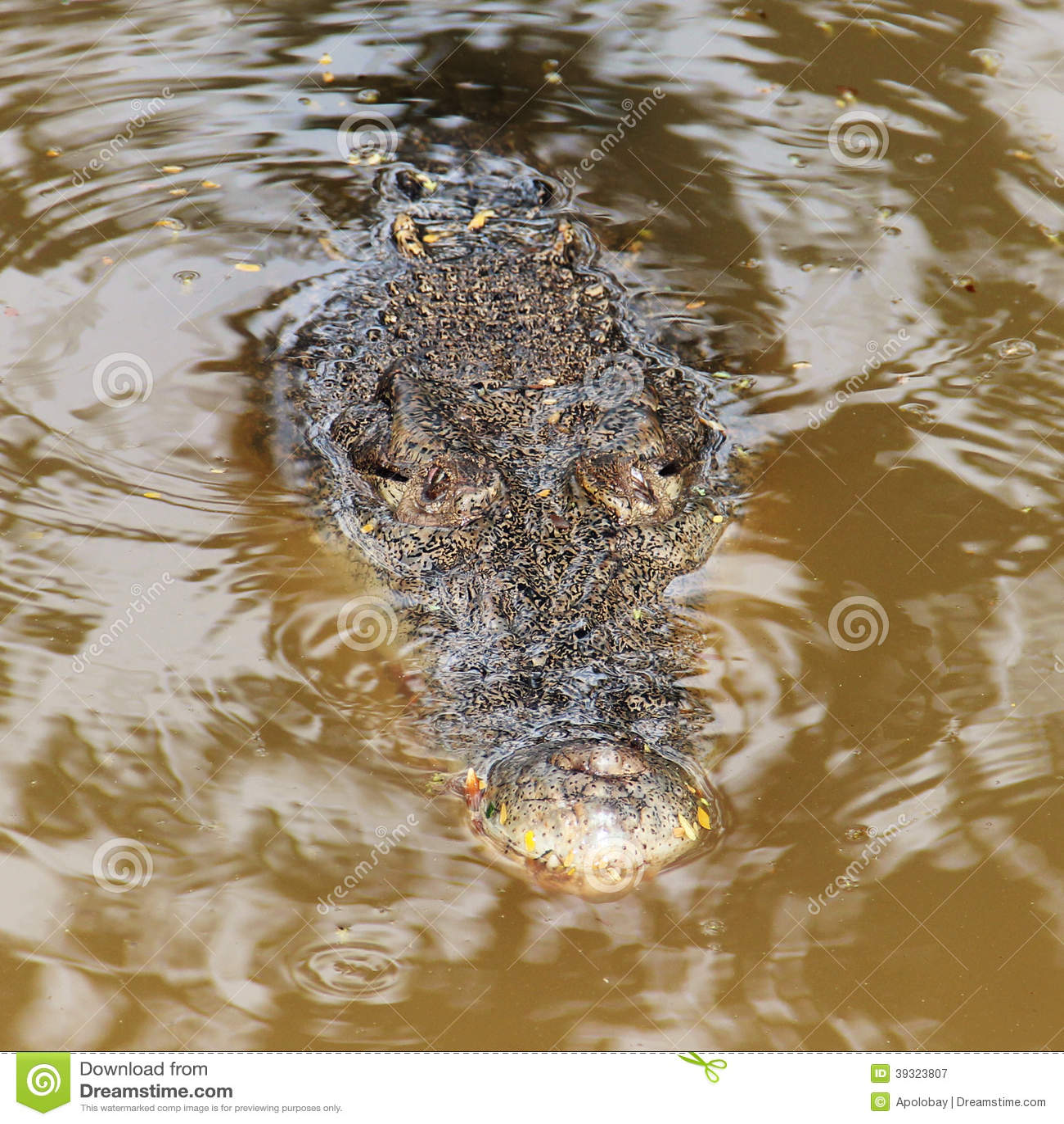 Caza del cocodrilo en un lago