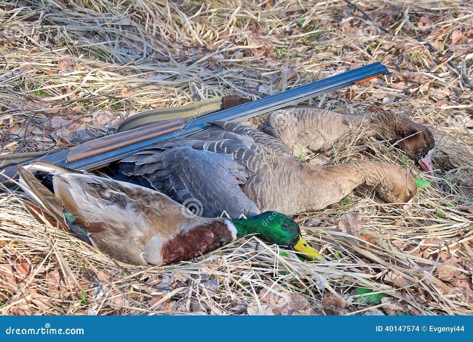 Cazador del trofeo: gansos salvajes y pato salvaje