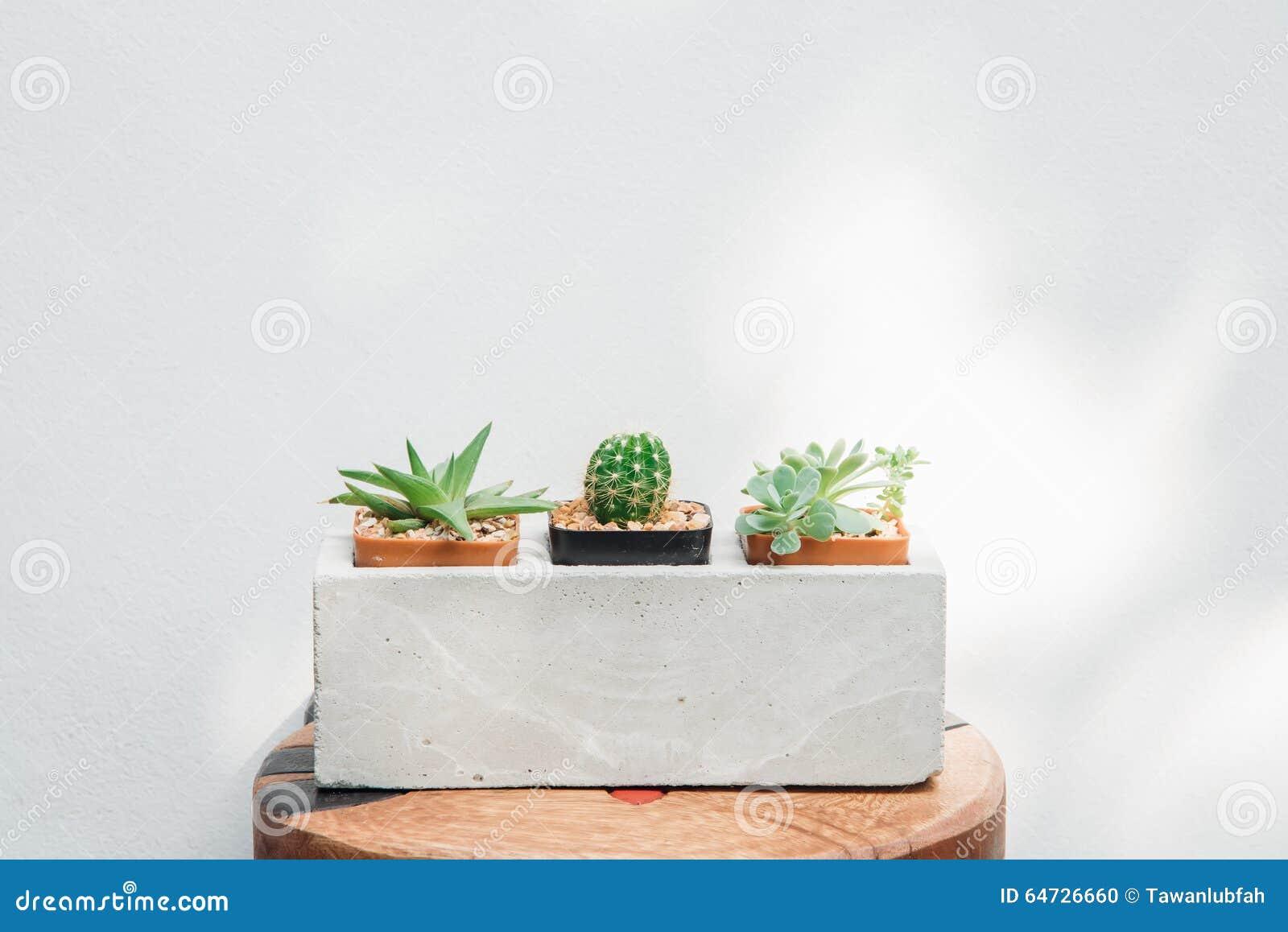 Ccactus in primo piano dei vasi con la luce della natura sul backgrou bianco della parete