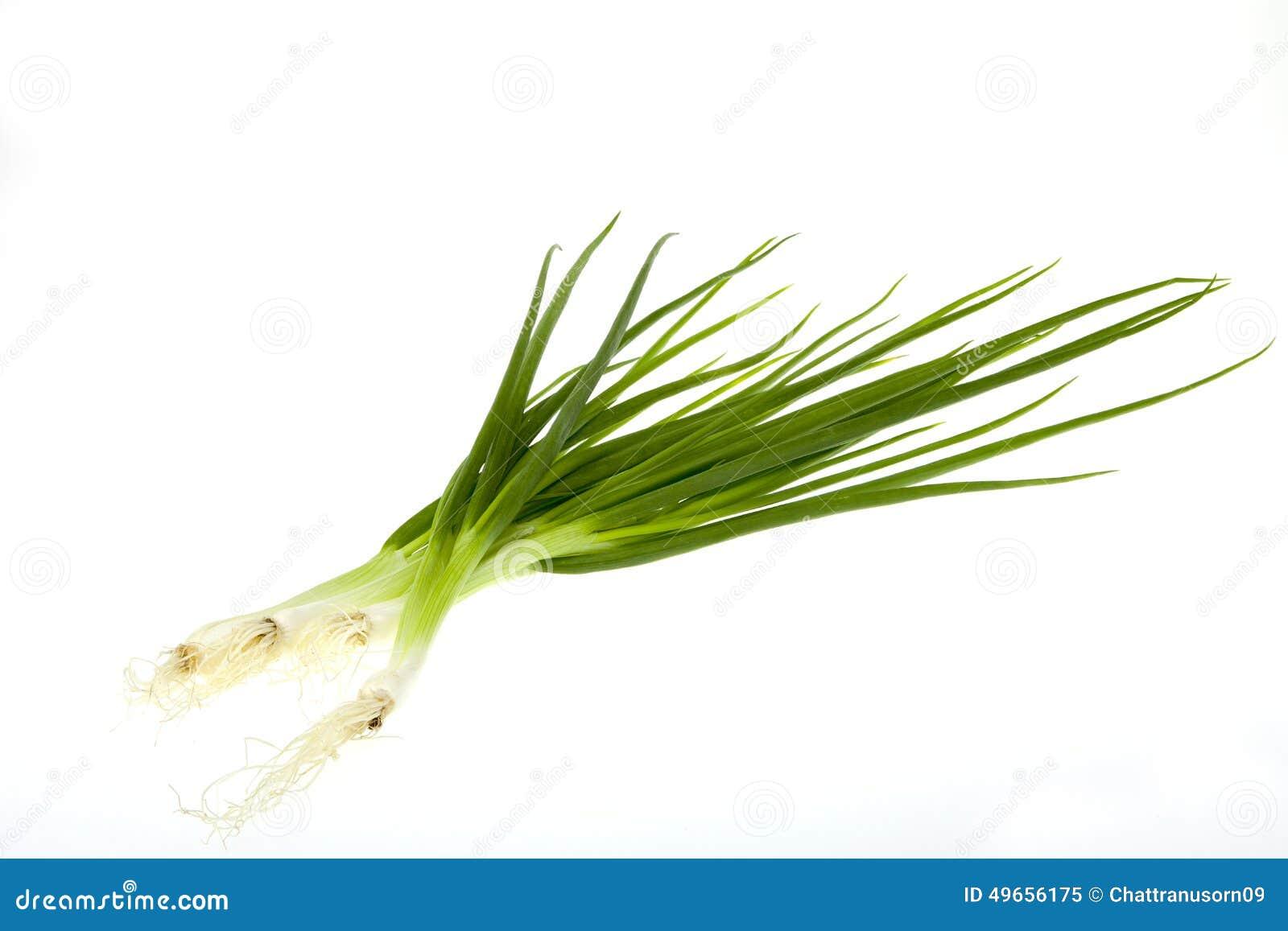Cebolinha da cebola verde