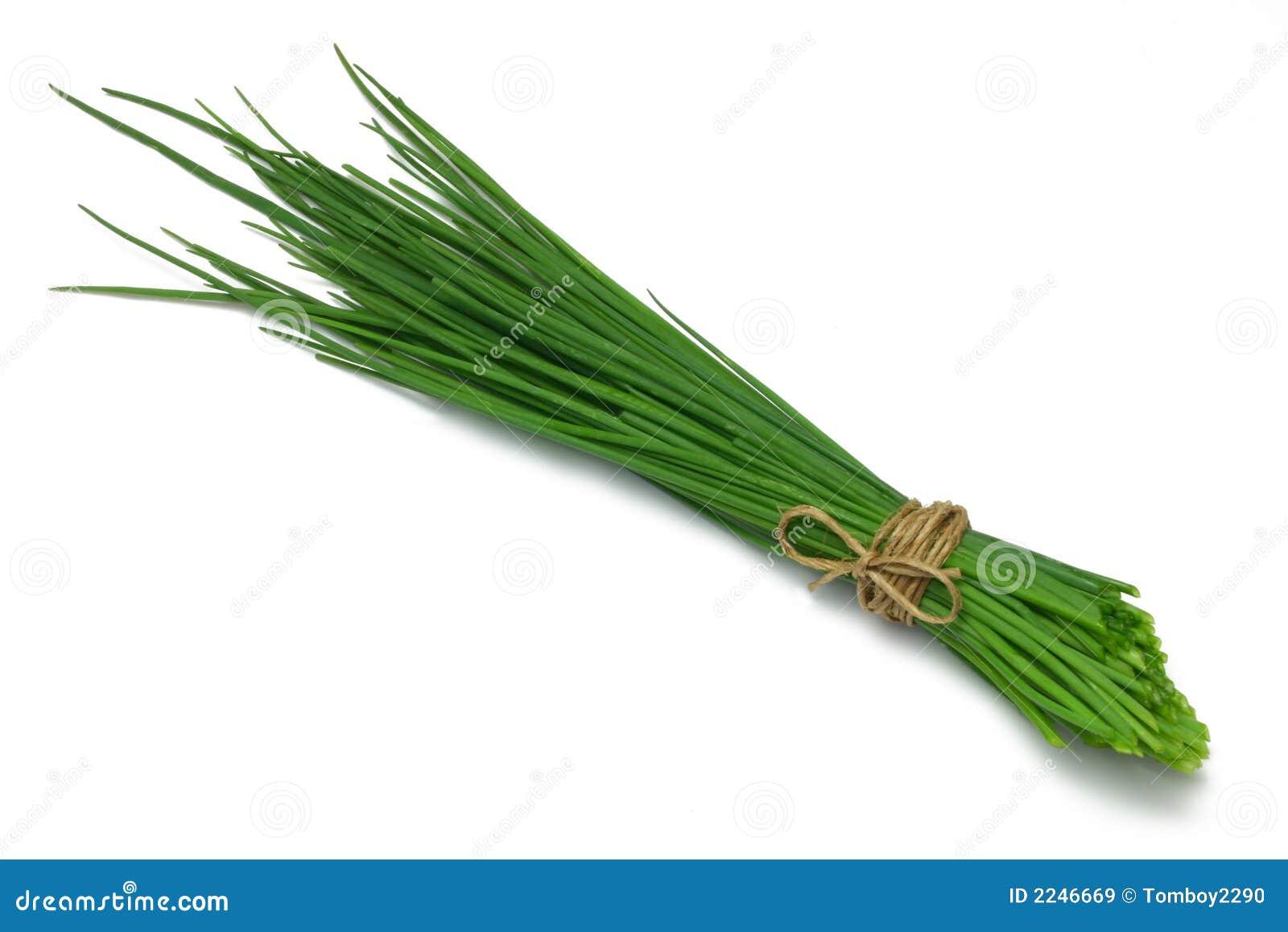 Cebolinhos da série da erva