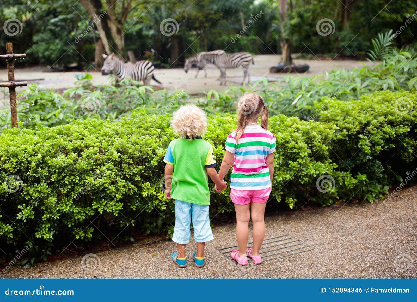 Cebra del reloj de los ni?os en el parque zool?gico Ni?os en el parque del safari