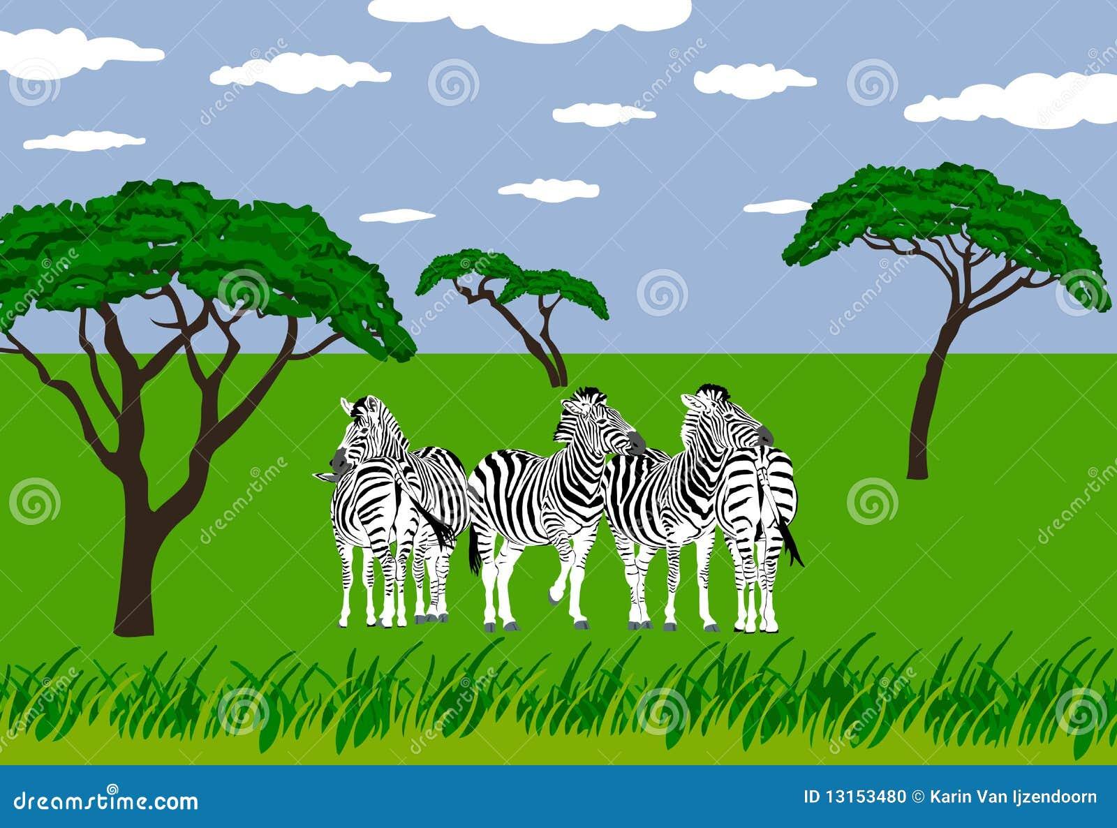 Cebras en prado