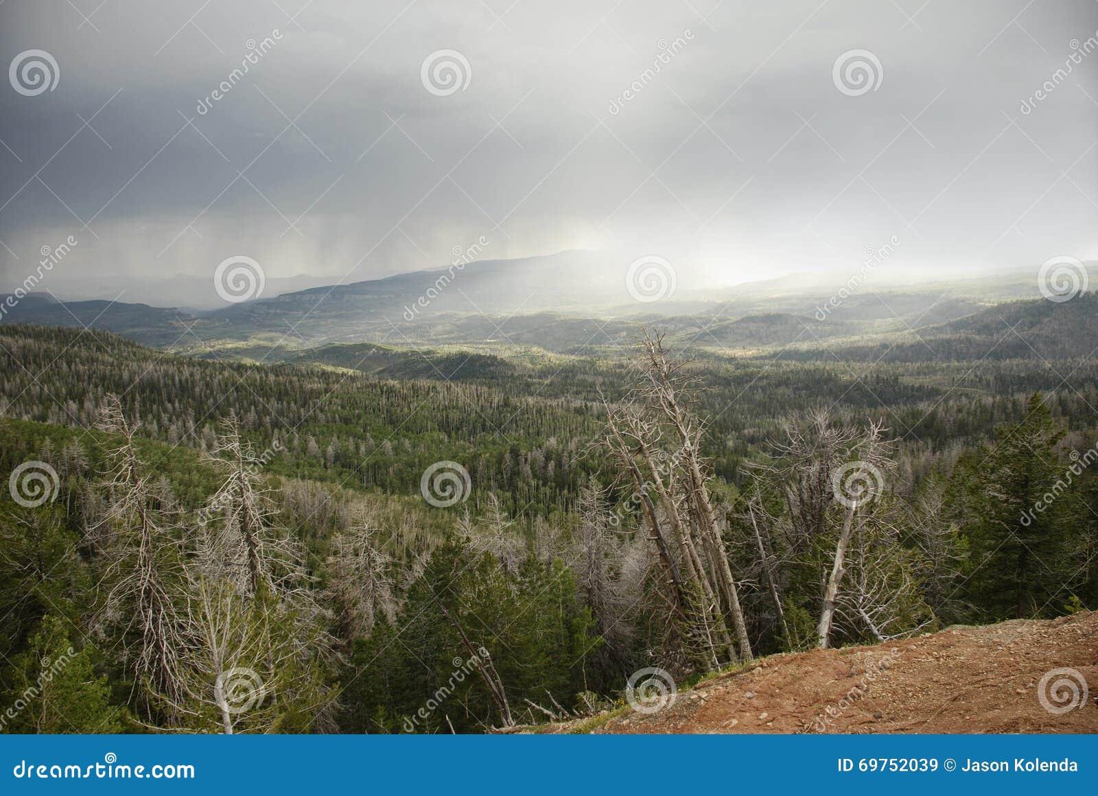 Cedar Breaks Ramparts Trail - regn