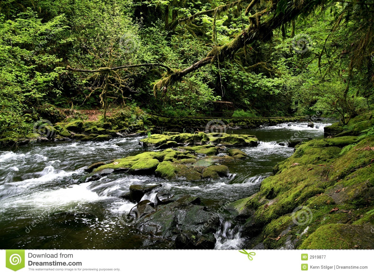Cedar Creek Royalty Free Stock Photography Image 2919877