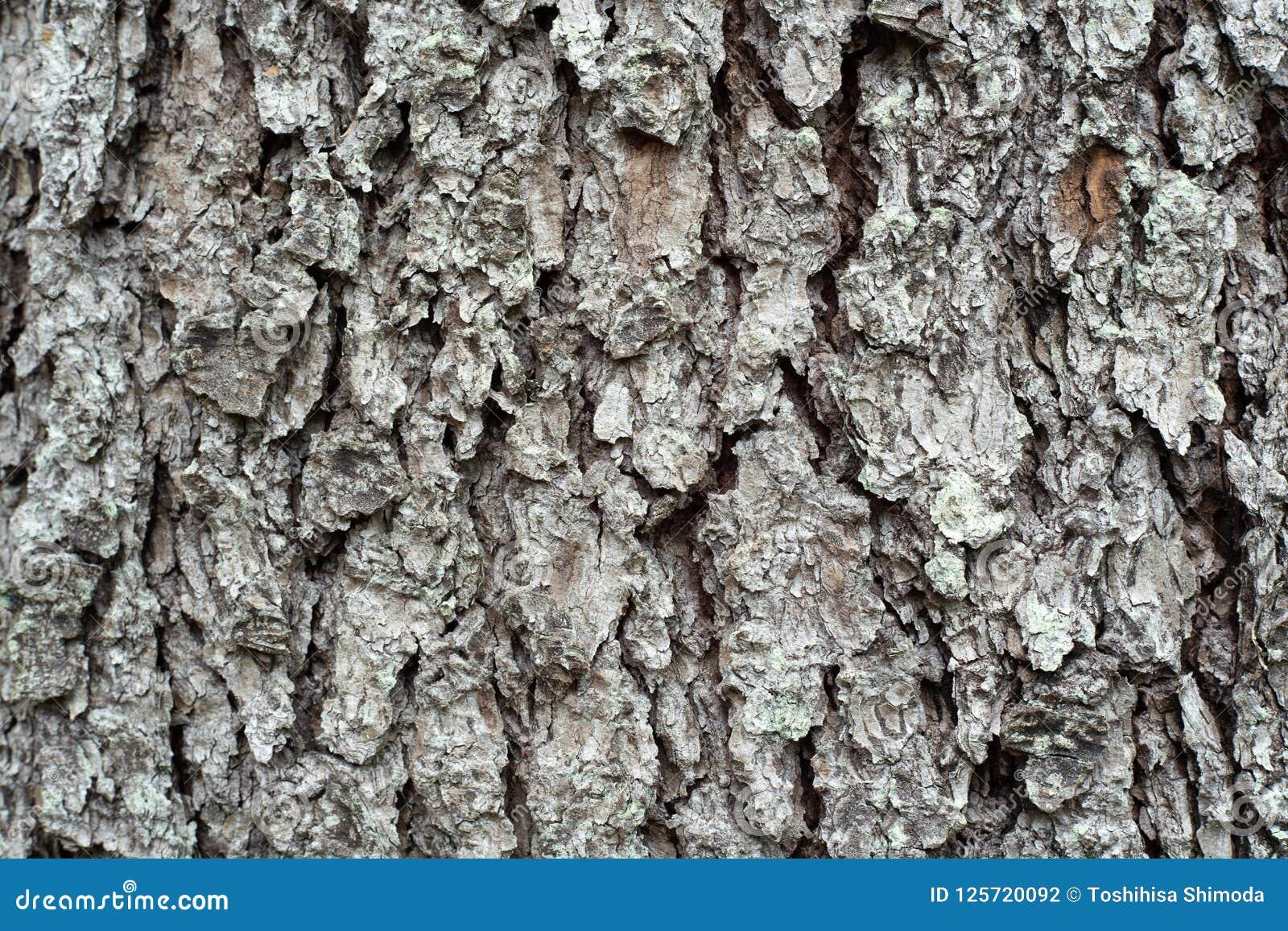 Cedar wood bark.