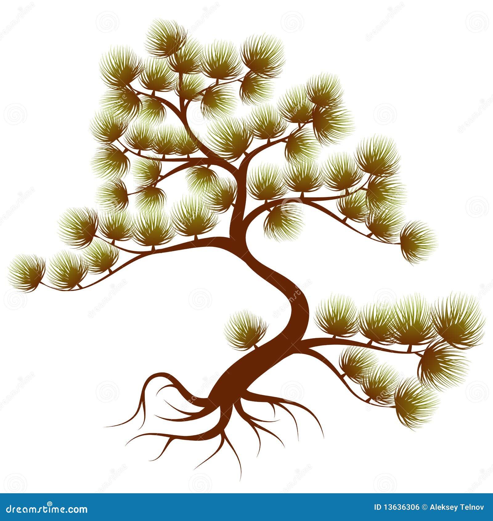 Cedro del árbol