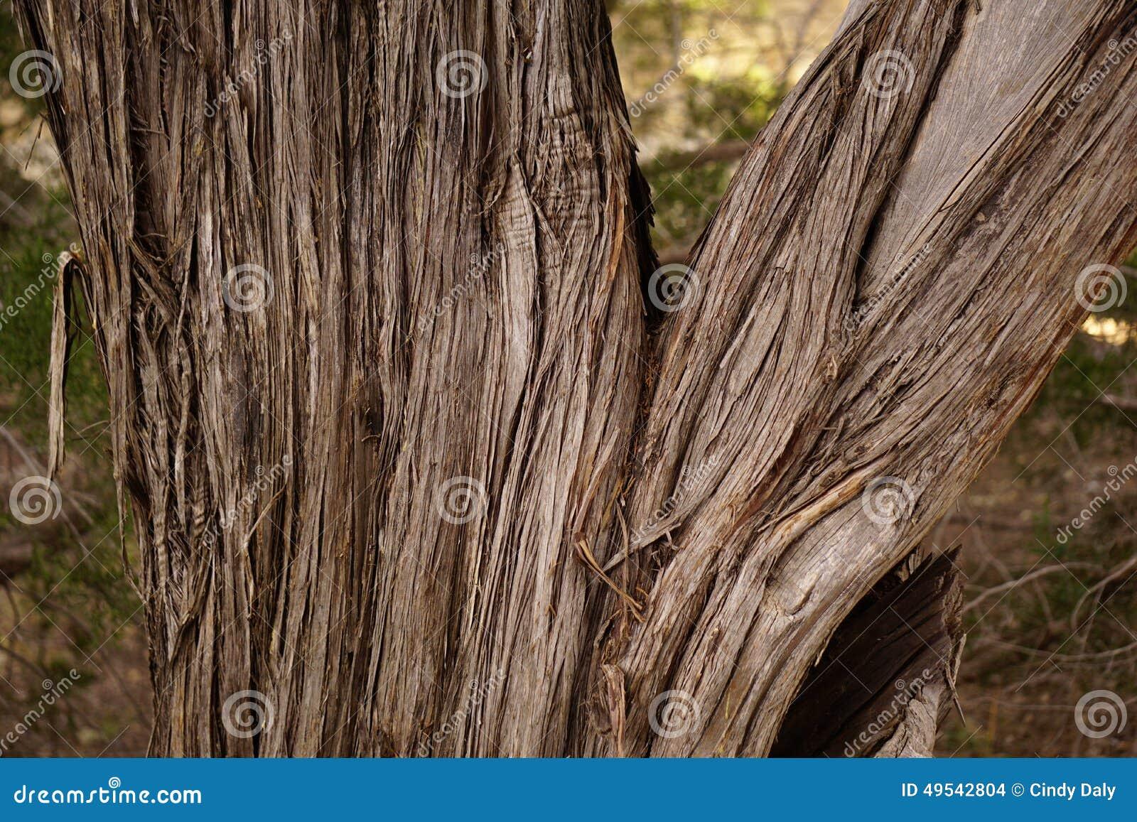 Cedrowy drzewny bagażnik