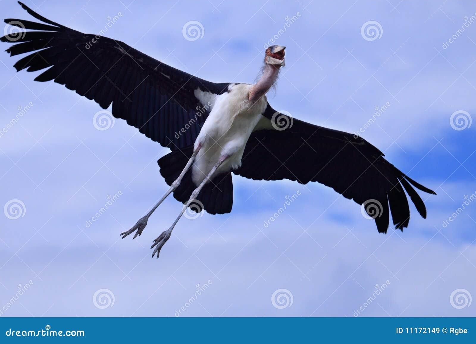 cegonha de marabu imagem de stock imagem de azul pássaro 11172149