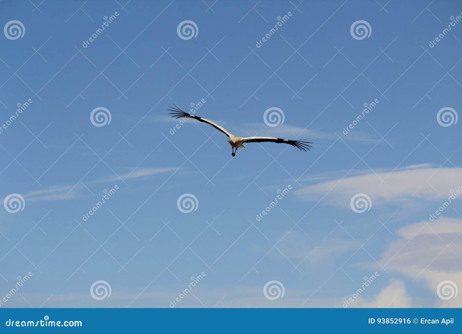 a cegonha está voando no ar do thr acima da casa foto de stock