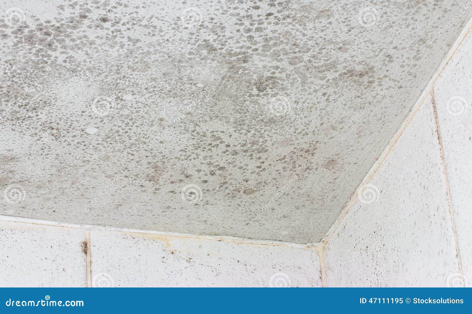 Ceiling Mould Mildew Stock Image Image Of Allergy Improvement - Mildew on bathroom ceiling