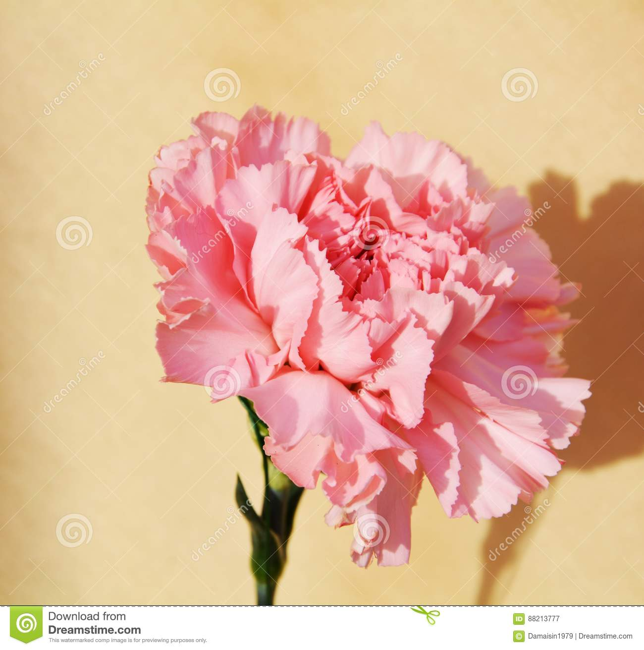 Celebrating delicacy symbol stock image image of flowers grace celebrating delicacy symbol izmirmasajfo