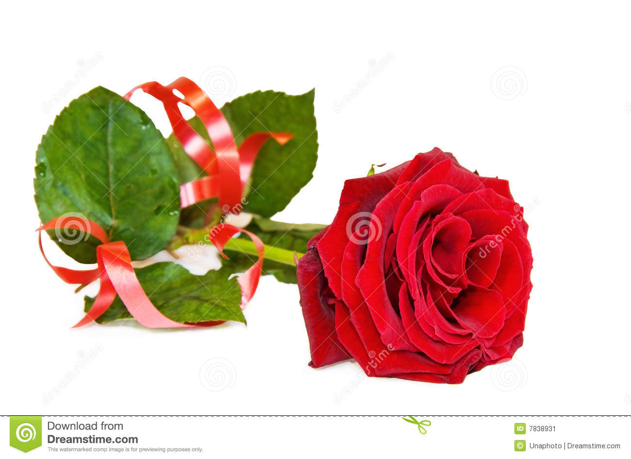 Single Red Rose Over White Stock Image