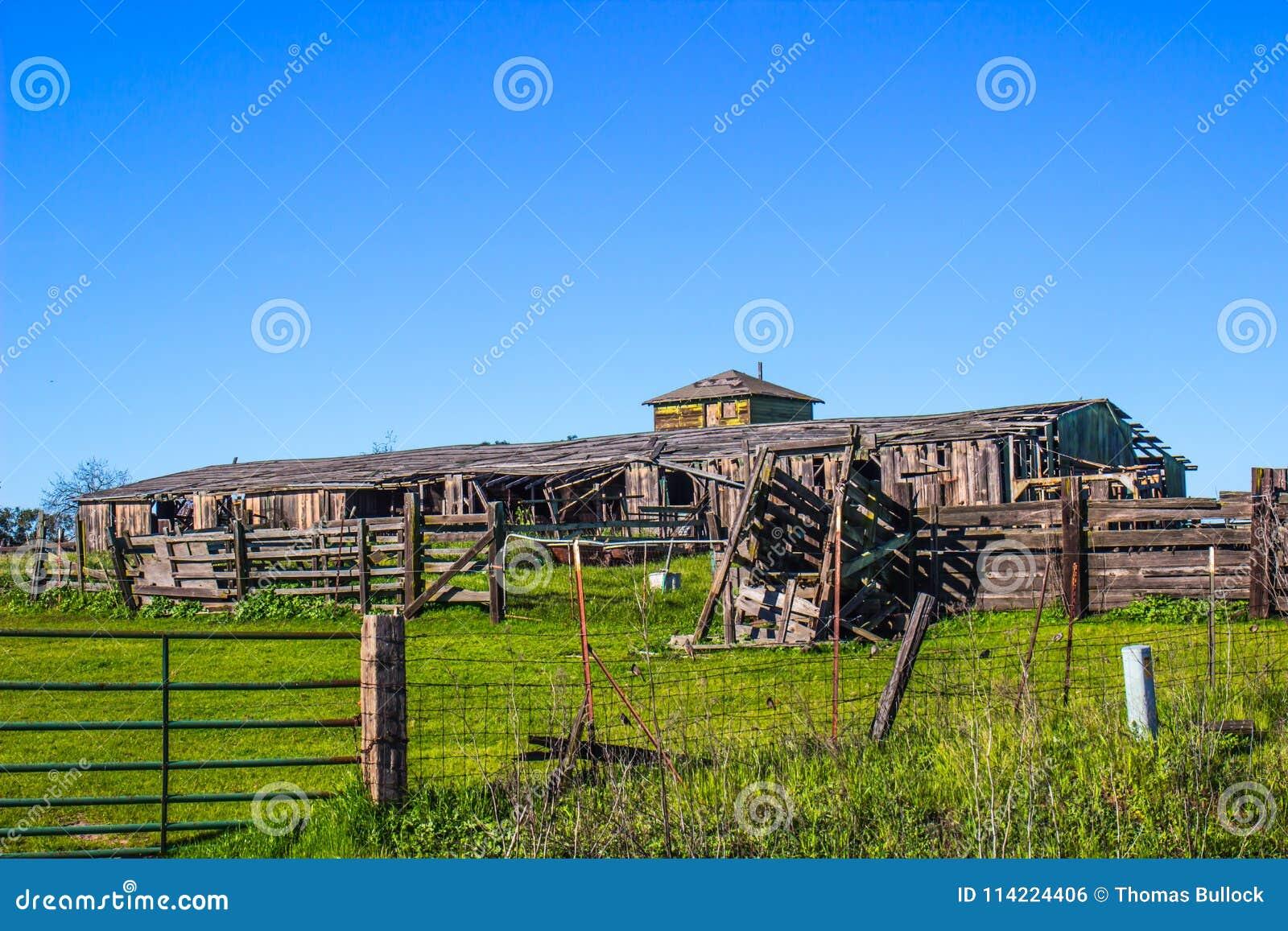 Celeiro do vintage & cerco de madeira com a rampa do gado na ruína