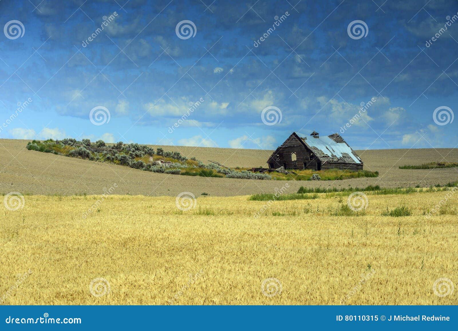Celeiro em campos de trigo na estrada 2 perto de Waterville, WA