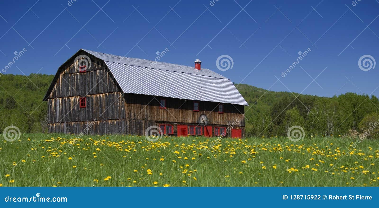 Celeiro velho bonito com portas vermelhas em um campo dos dentes-de-leão