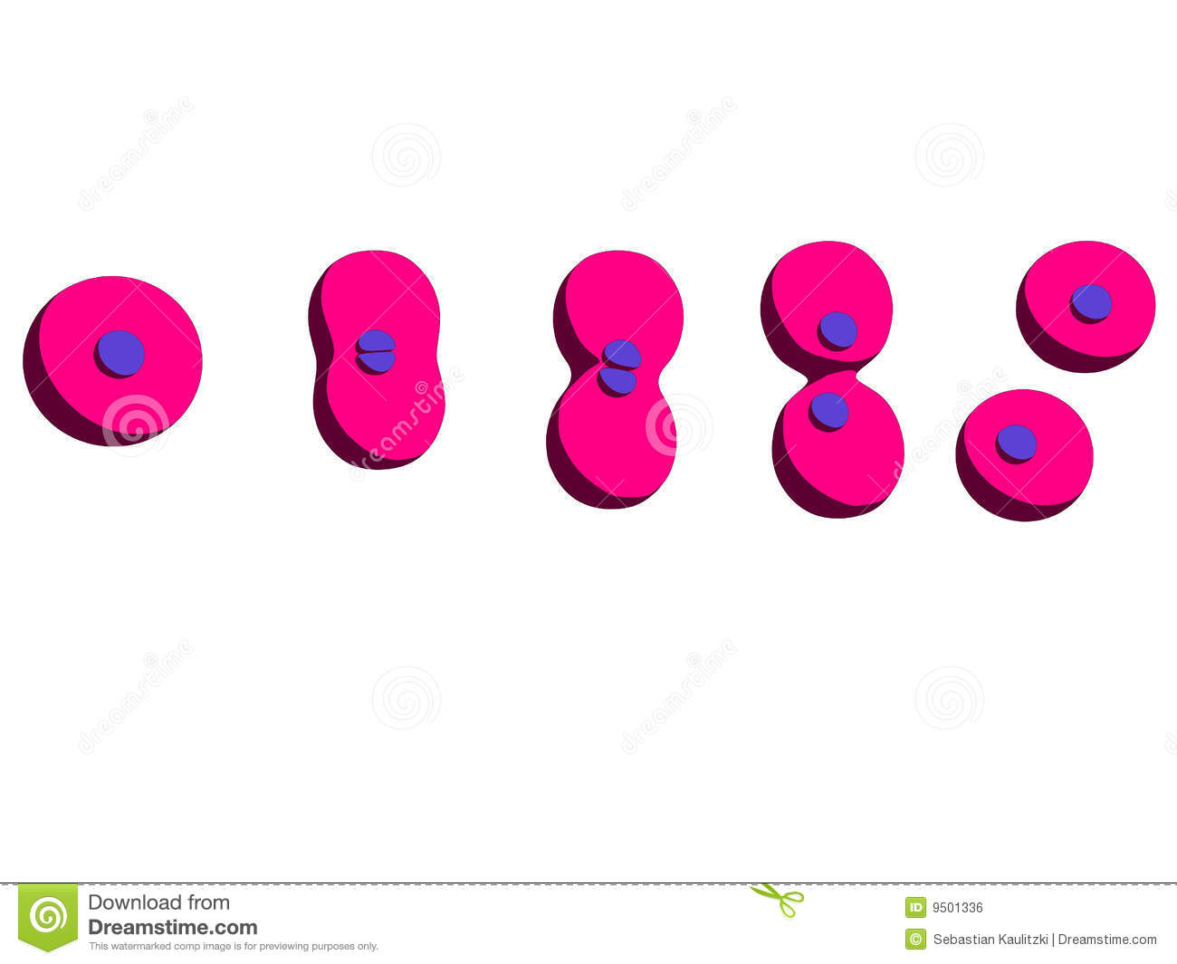 Cell Division Royalty Free Stock Image - Image: 9501336