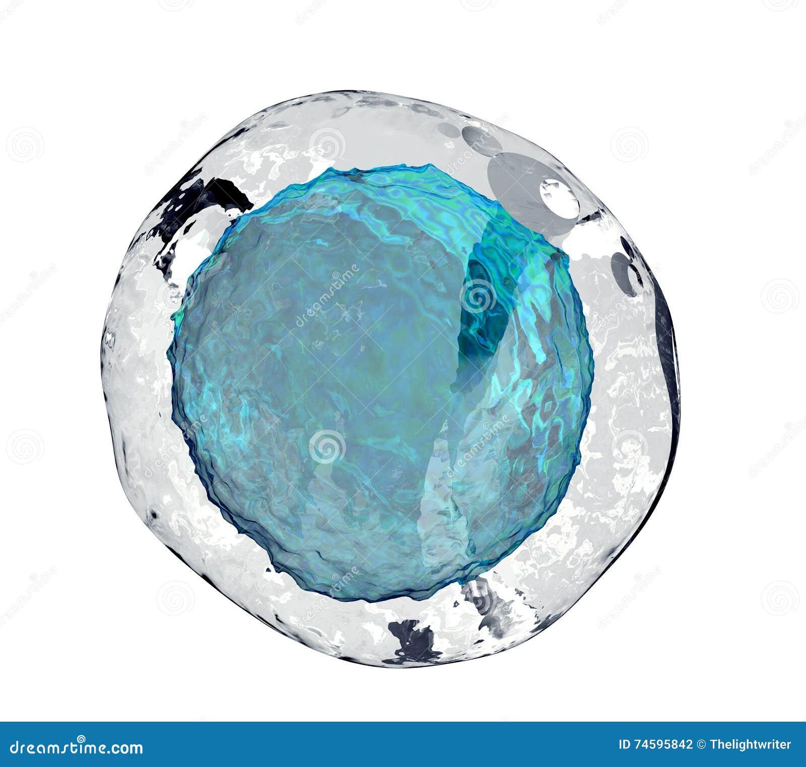 Cell för mänskligt ägg på vit