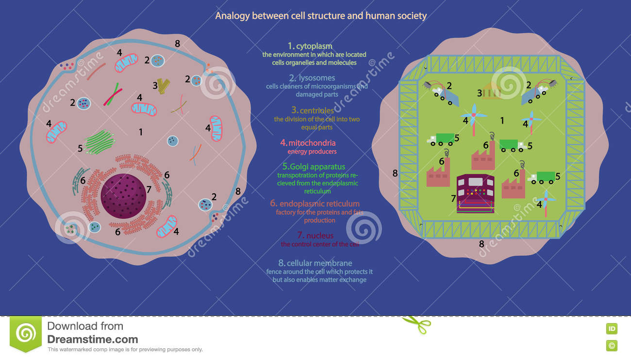 Cell Nucleus  Parts Of The Cell Nucleus Vector
