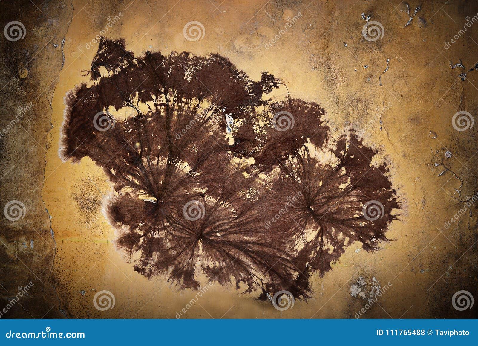 Cellar fungus mycelium on wall & Cellar Fungus Mycelium On Wall Stock Photo - Image of moisture ...