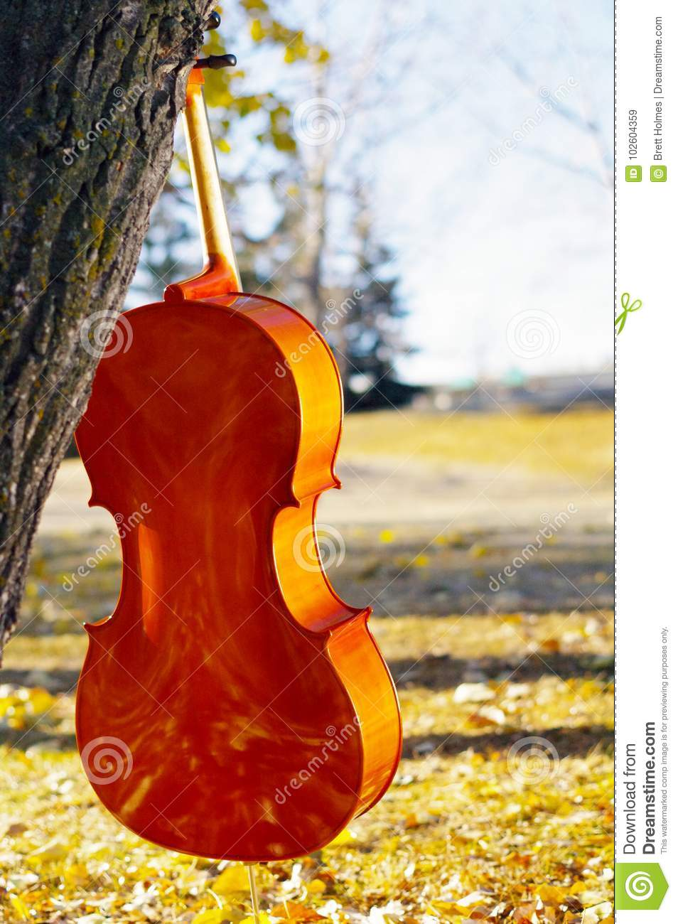 Cello outdoors in the park in fall autumn day with colourful lea