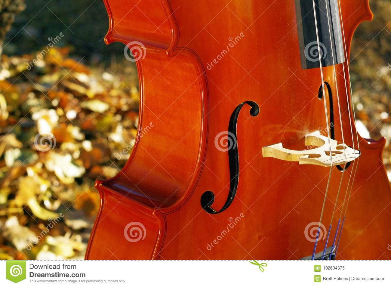Cello outdoors closeup in the park in fall autumn day with colourful leaves