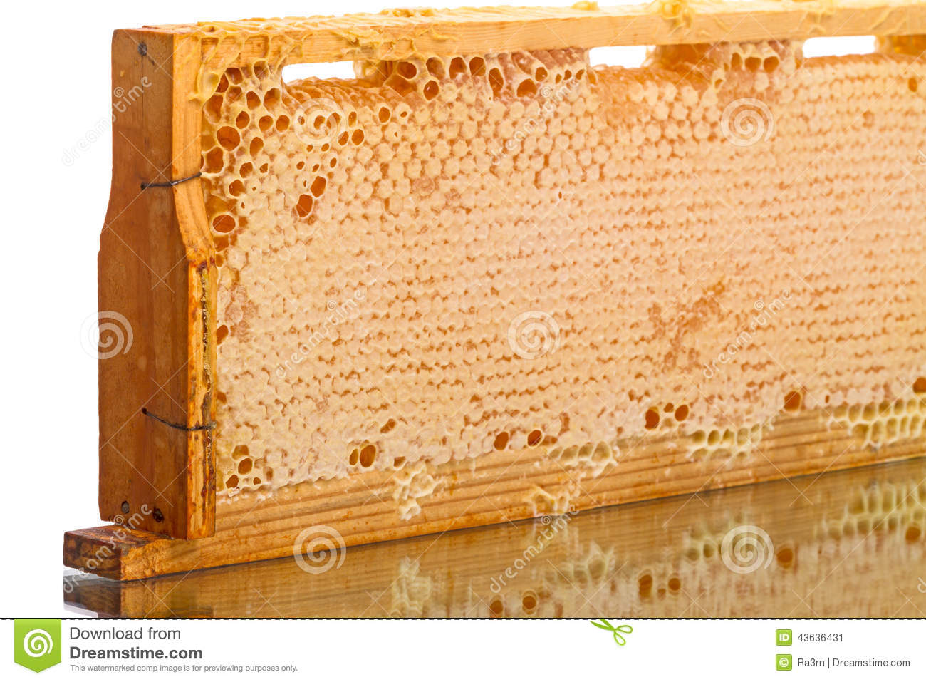 Cells of the hive with honey