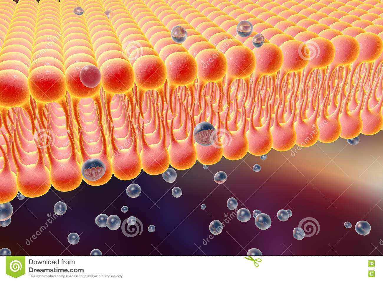 Cellular Membrane Diffusion Molecules Cell Lipid Bilayer D Illustration Liquid Cell