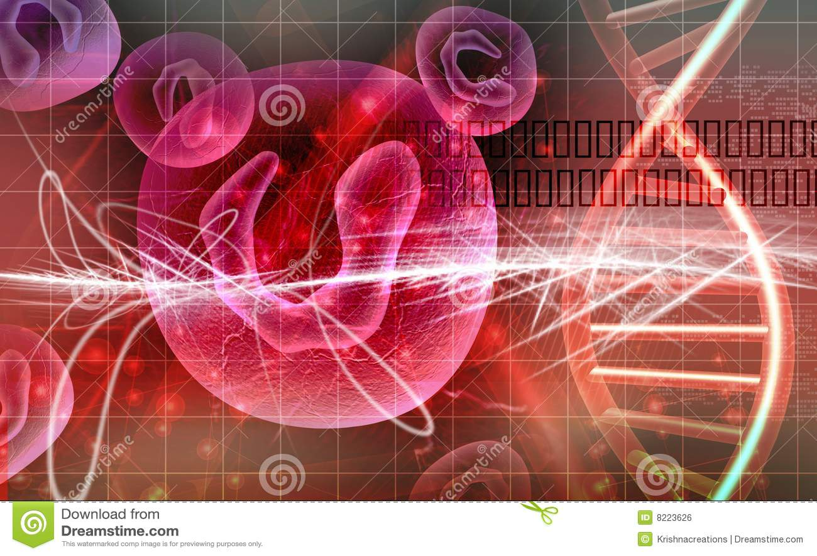 Cellules et ADN