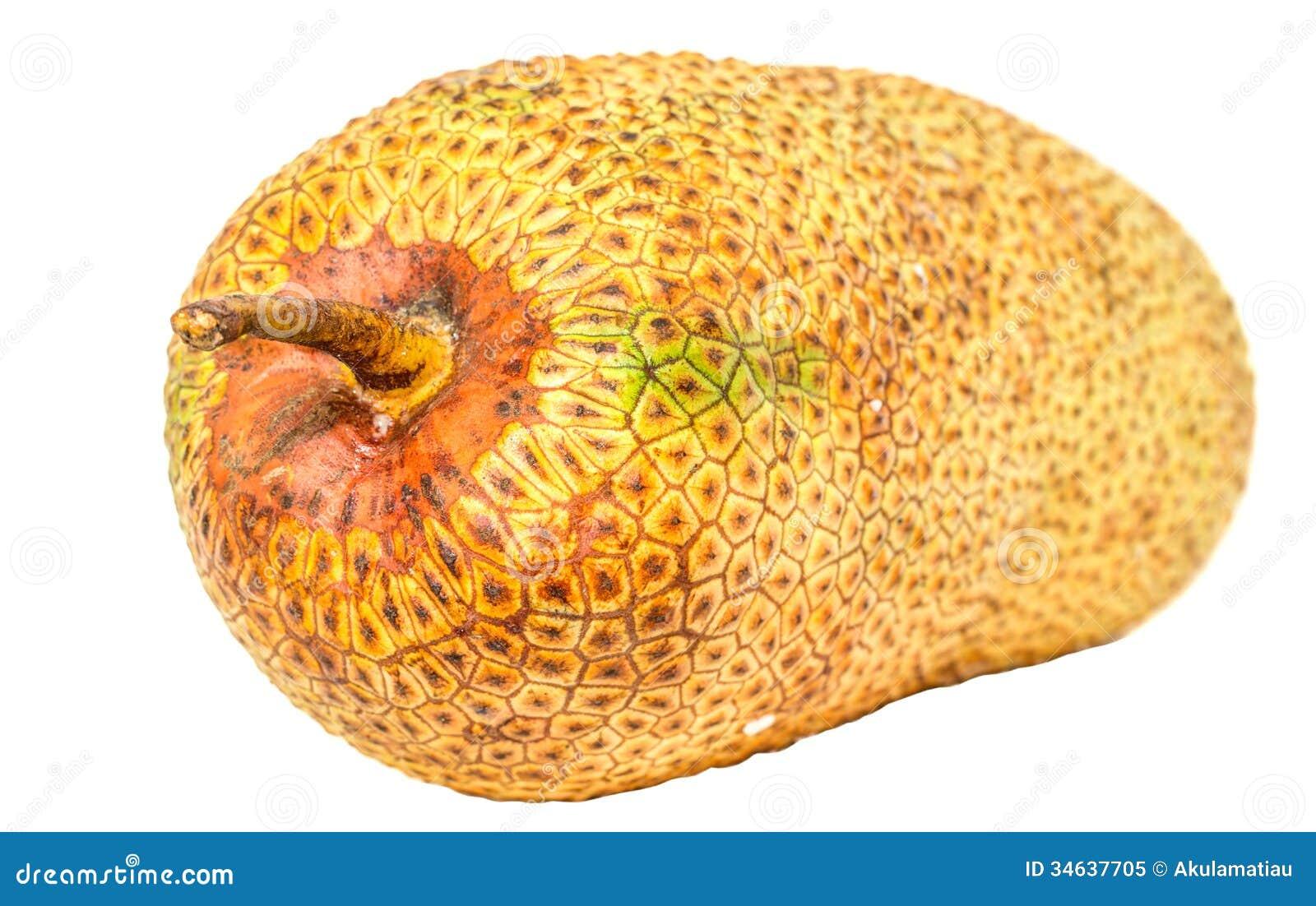 Cempedak Fruit V stock image. Image of skin, asia, fibrous - 34637705