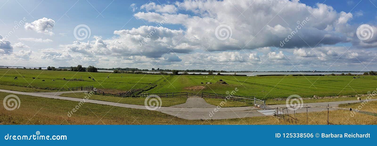 Cenário de Elbe River em Kollmar, Schleswig-Holstein/Alemanha