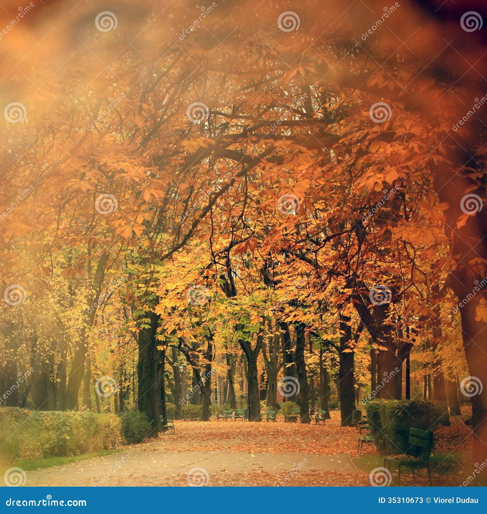 Cenário do outono no parque
