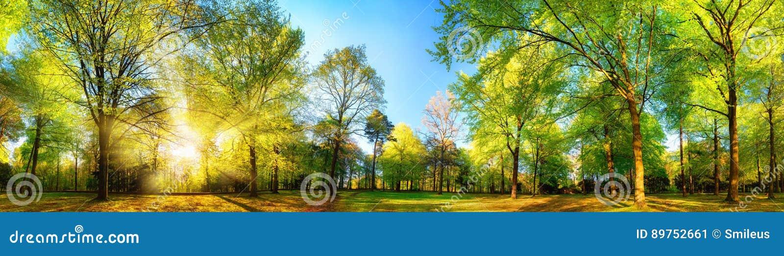Cenário panorâmico lindo da mola com árvores ensolarados