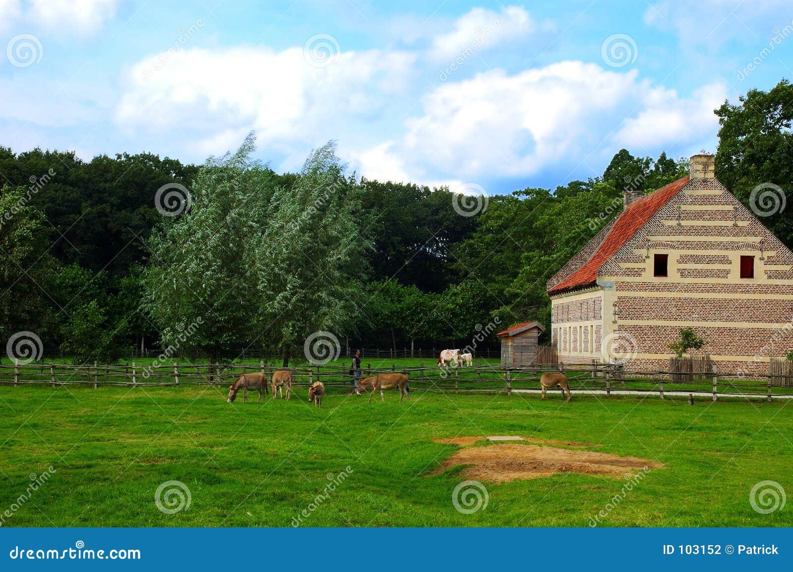 Cenário rural.