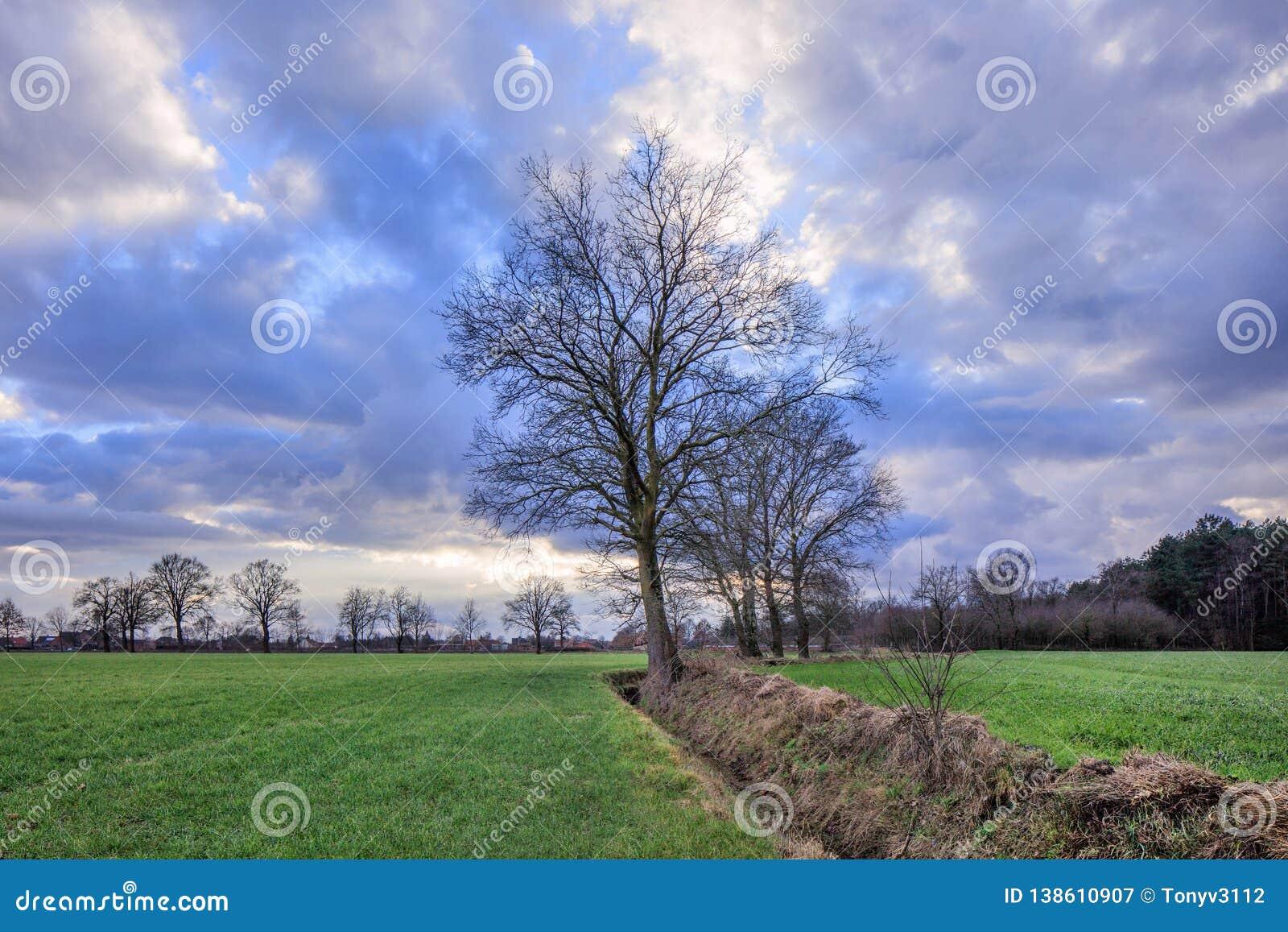Cenário rural, campo com árvores perto de uma vala com as nuvens dramáticas no crepúsculo, Weelde, Bélgica