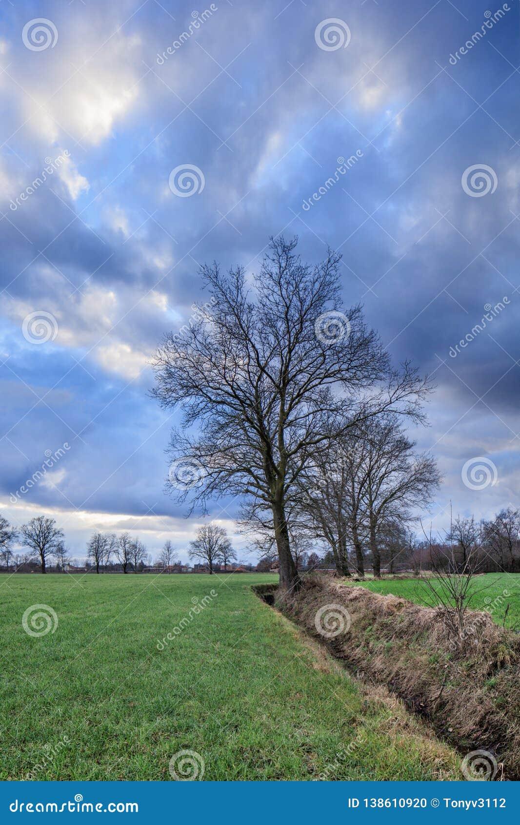 Cenário rural, campo com árvores perto de uma vala com as nuvens dramáticas no crepúsculo, Weelde, Flanders, Bélgica