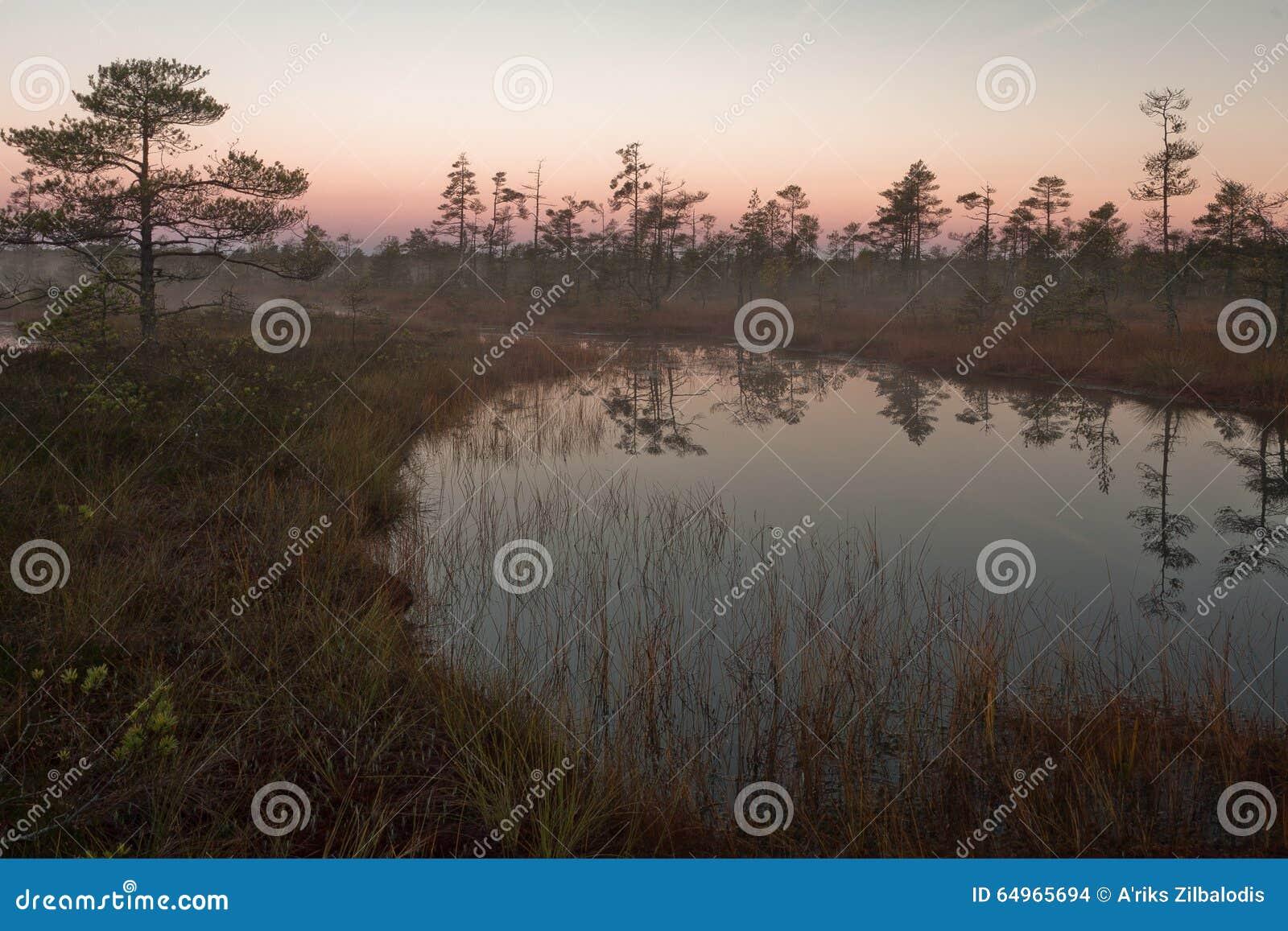 Cena bog in early morning