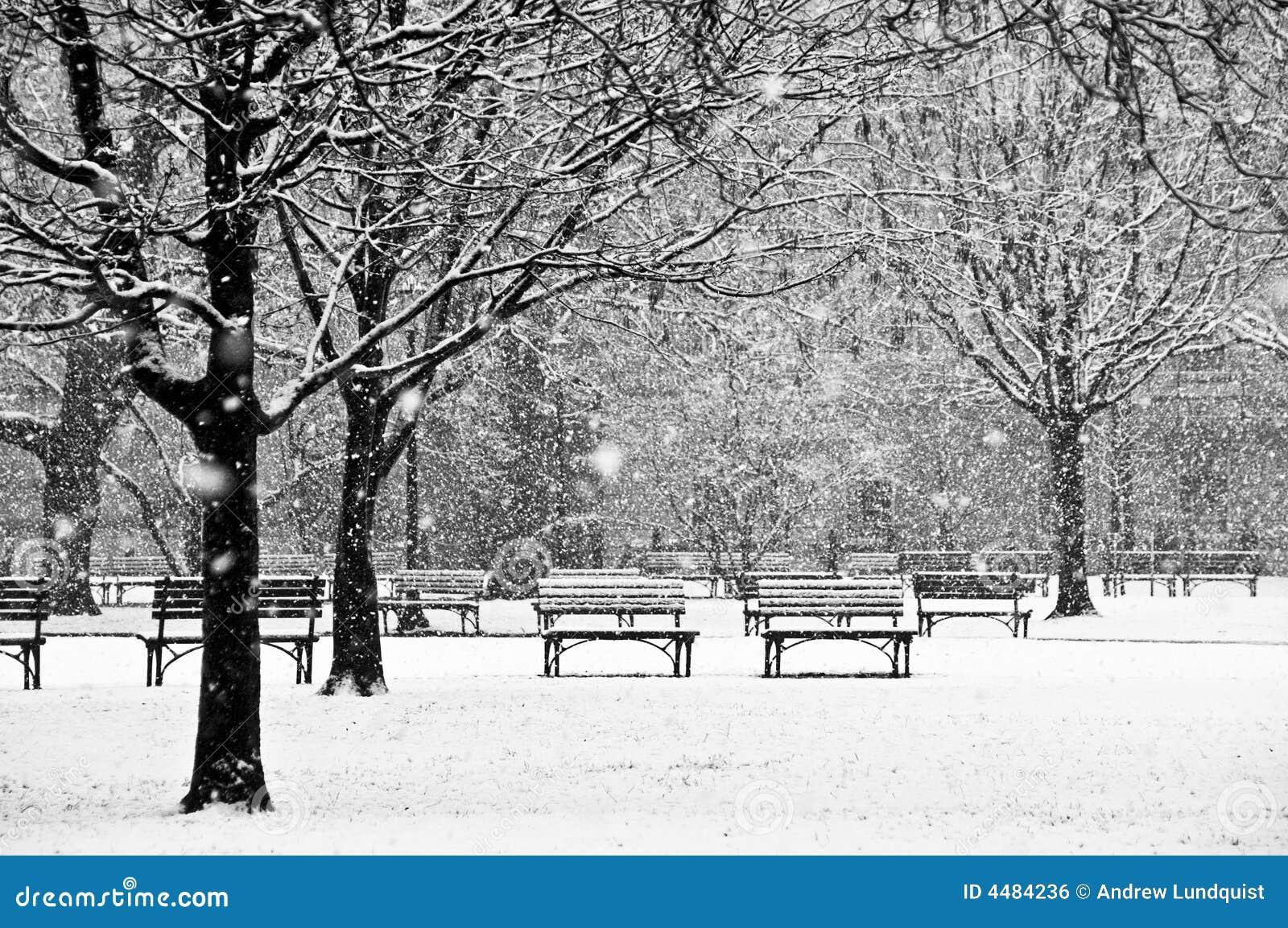 Cena bonita, calma de um parque durante um inverno