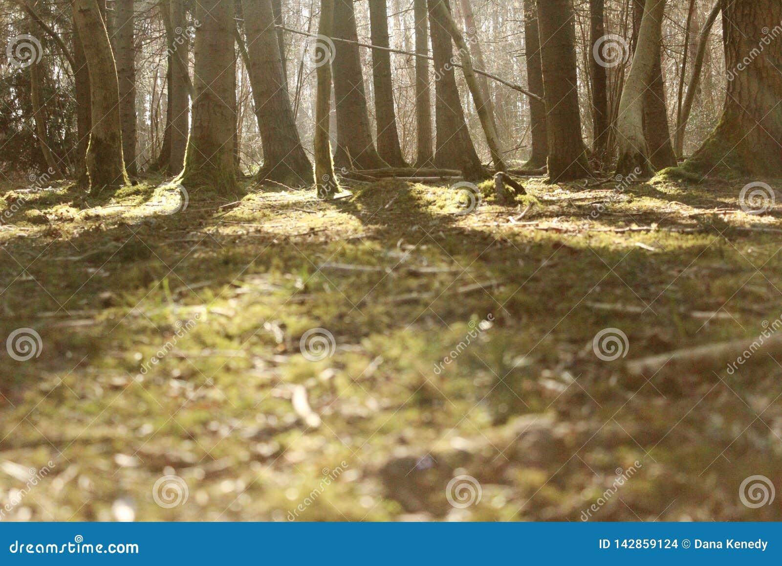 Cena da floresta com o alargamento borrado do primeiro plano e da lente