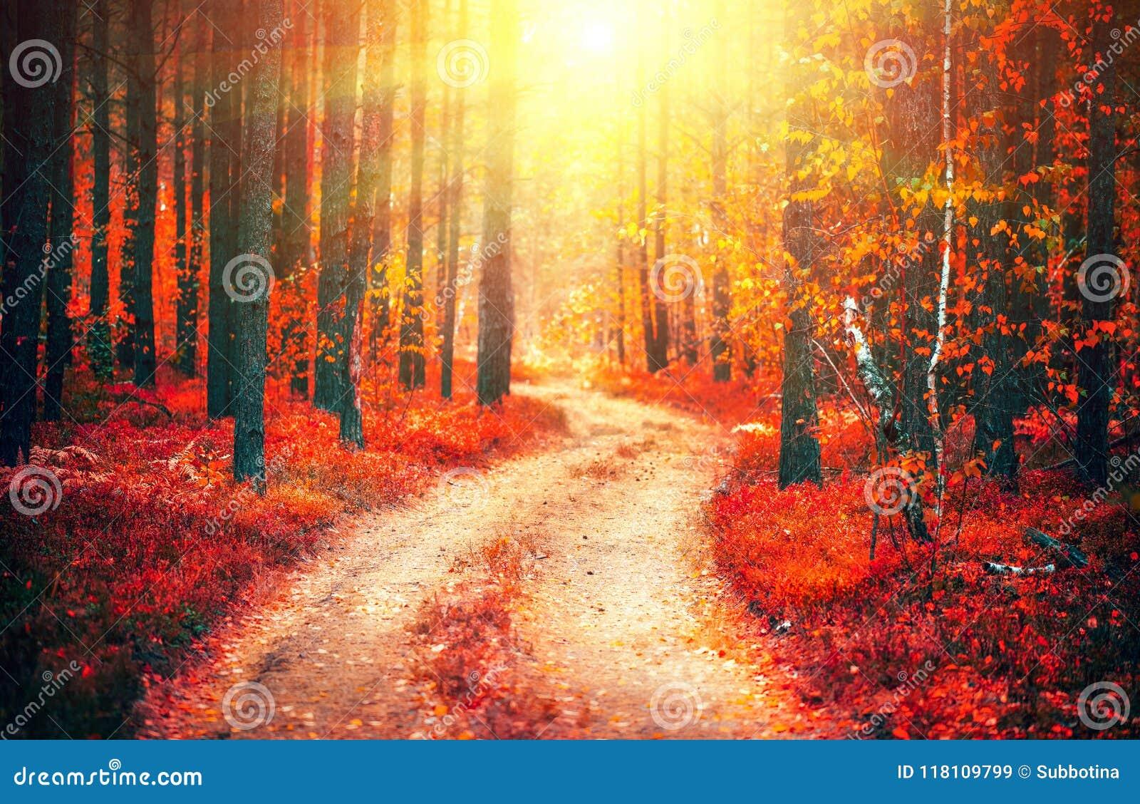 Cena da natureza do outono Paisagem da queda da fantasia Parque outonal bonito com caminho