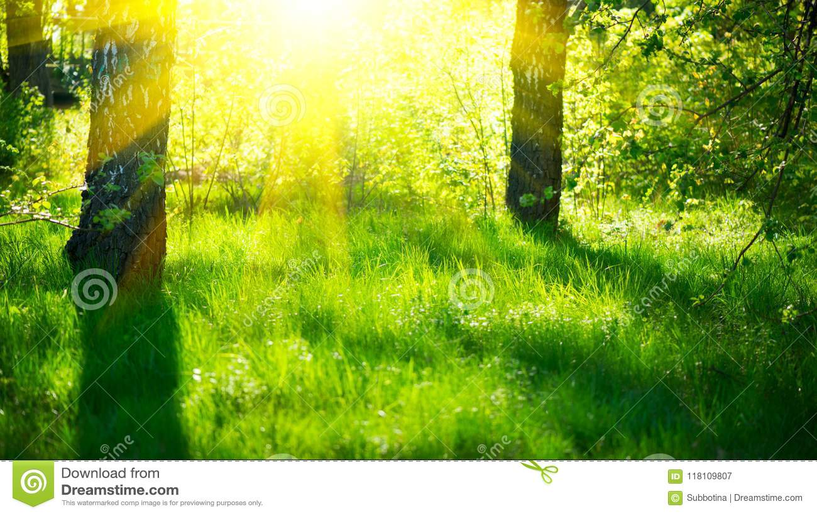 Cena da natureza da mola Paisagem bonita Parque com grama verde