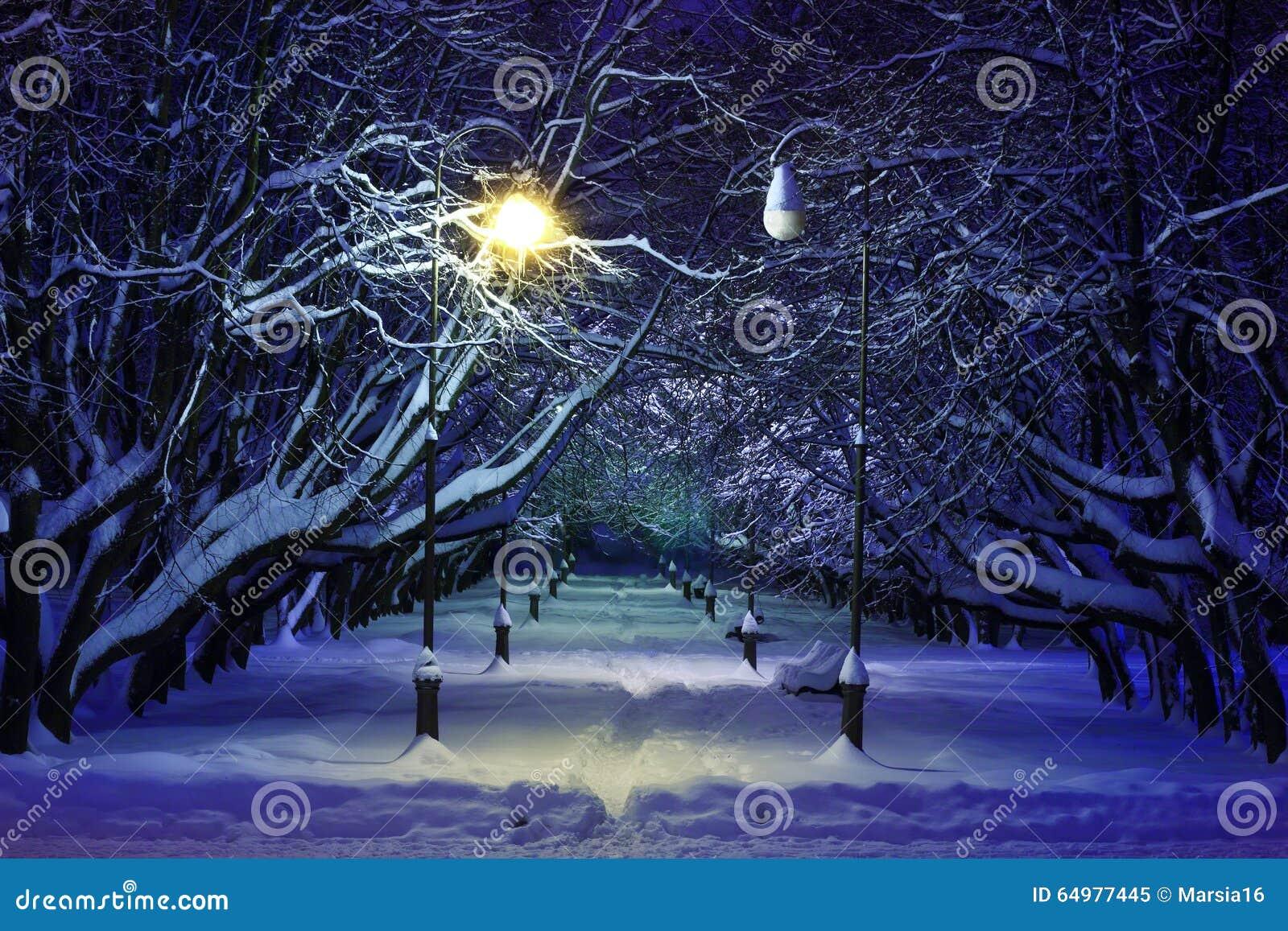 Cena da noite do parque do inverno
