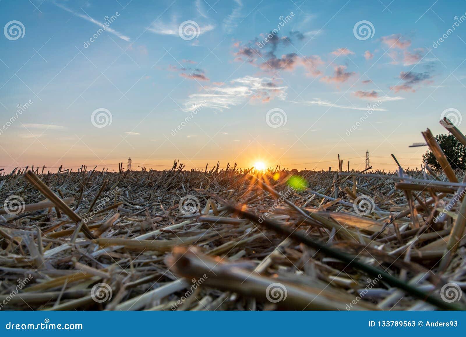 Cena do campo dos campos e dos pilões da eletricidade contra o céu dourado do por do sol